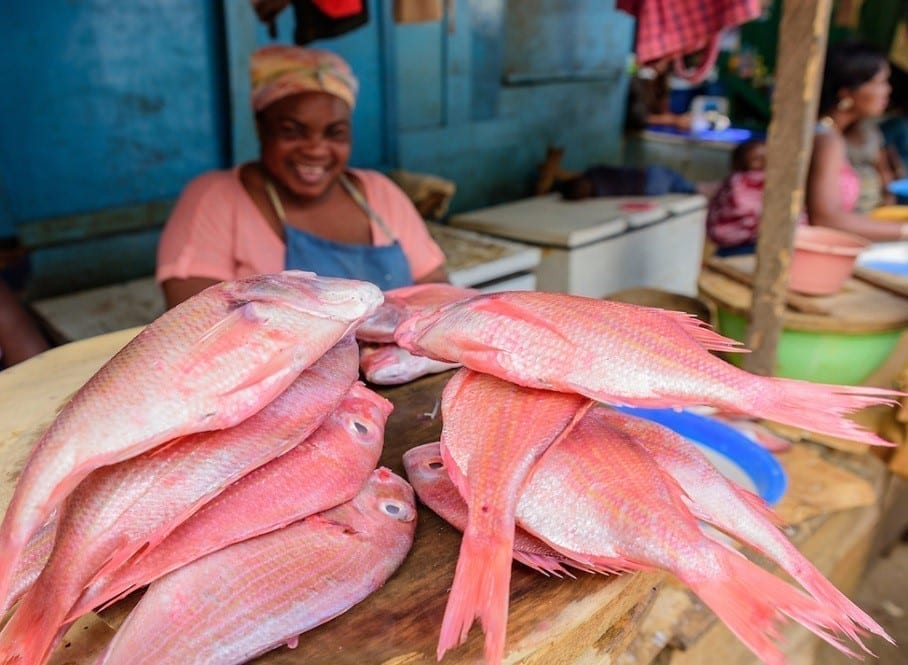 Market Research on Fish Farming and Aquaculture in Ghana